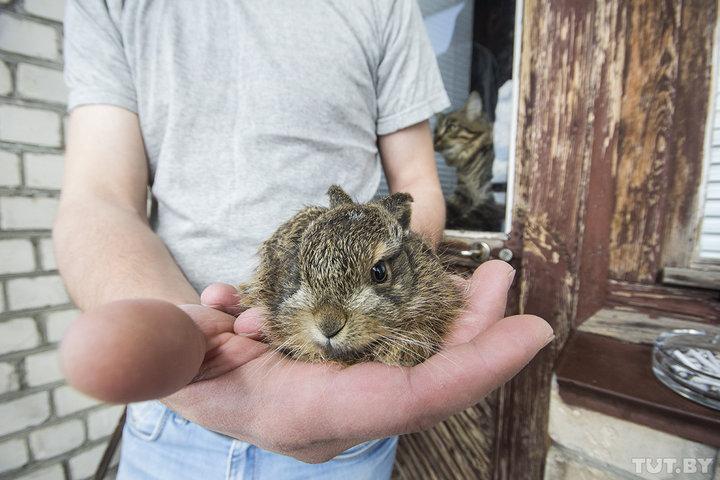 Как живет маленький заяц, которого спас водитель автобуса
