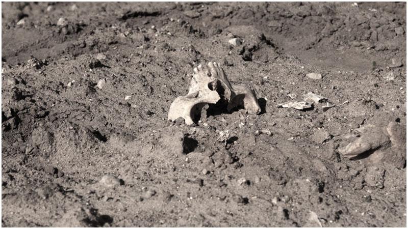 На поле в Каменецком районе обнаружены останки человека