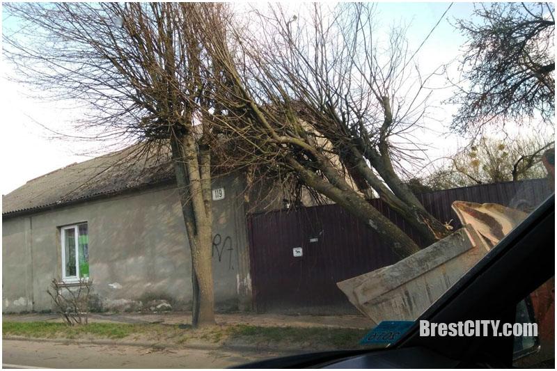 Необычное ДТП в Бресте: на ул.Пушкинской экскаватор повалил дерево