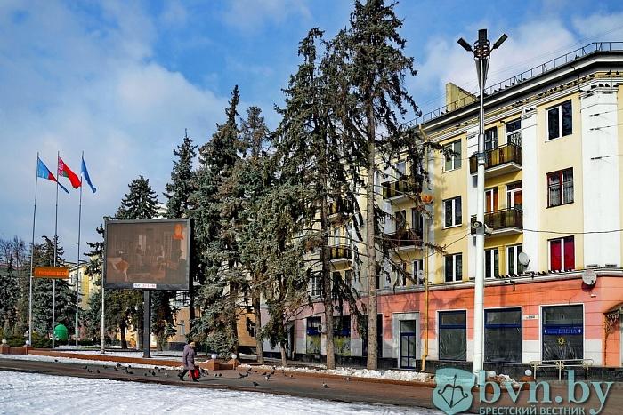 Старые ели на пл.Ленина спилят этой весной - новые деревья уже закуплены