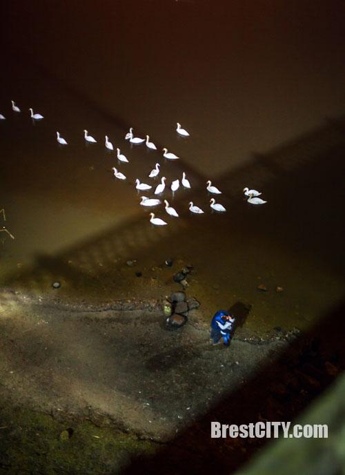 """""""Любовь и лебеди"""". Ночные фотографии от Артема Будника"""