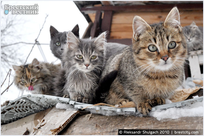 Зимовка котов