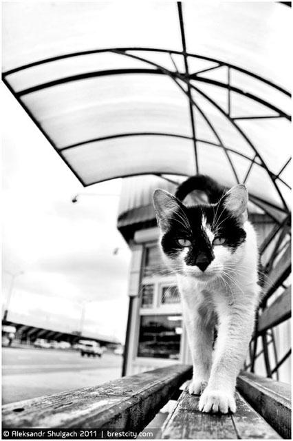 Кот на остановке в Бресте