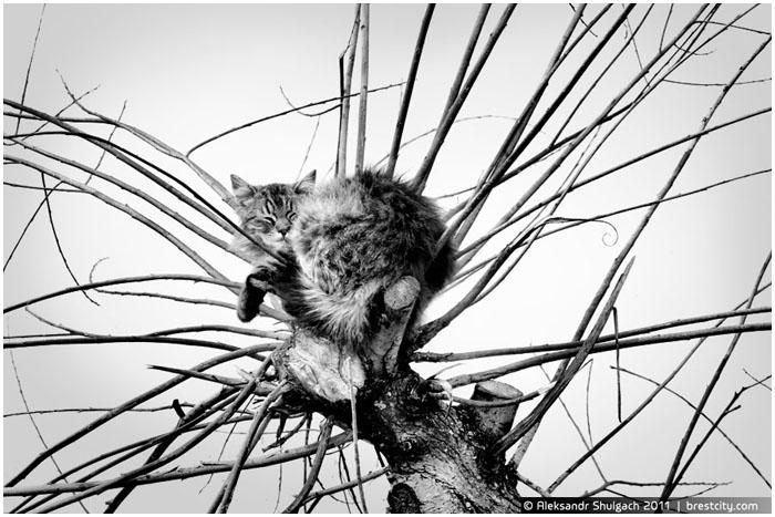 Осенний сон кота