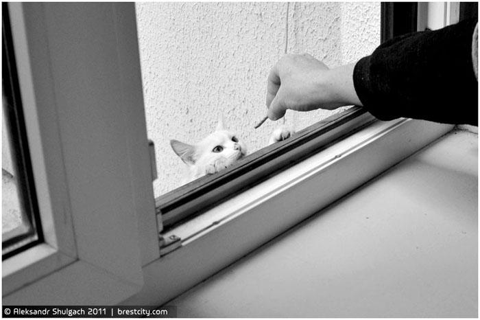 Незваный гость под окном