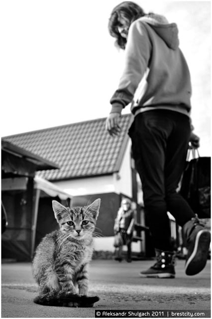 Ковалевский кот на рынке