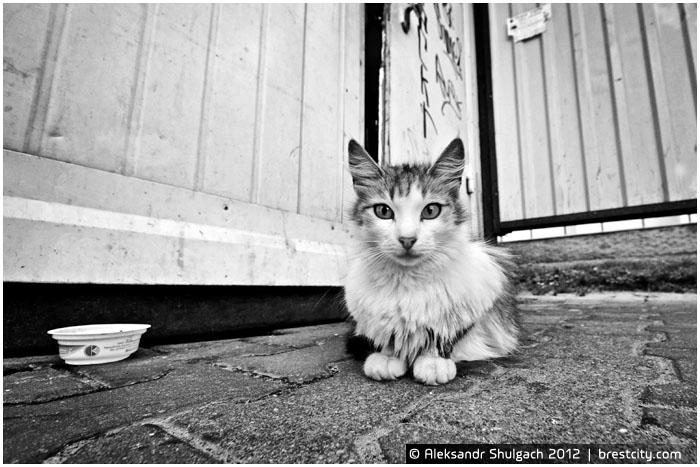 Маленький котенок на остановке