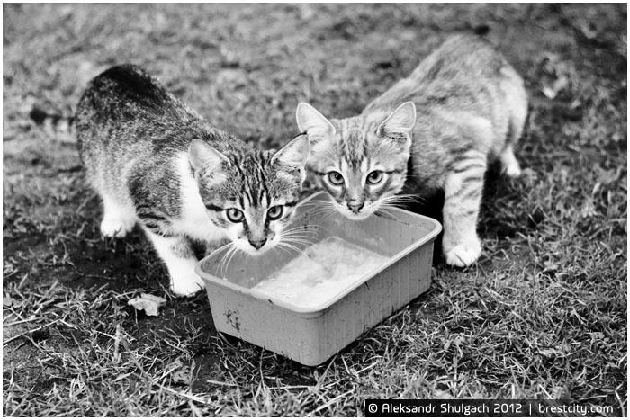 Что едят коты