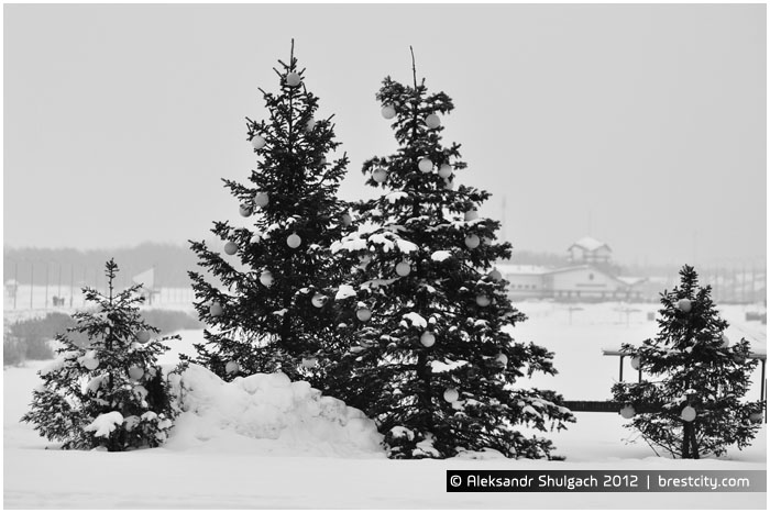 Наряженные новогодние елки в Бресте на Гребном канале