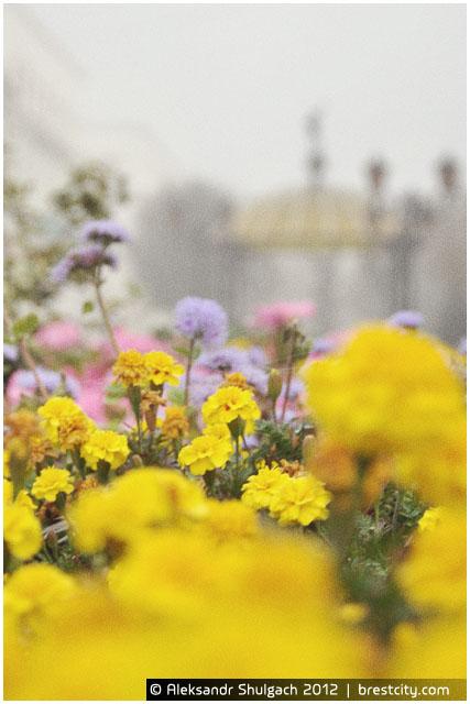 Цветы на улице Советской в Бресте