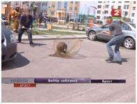 Бобр в Бресте на улице Сальникова