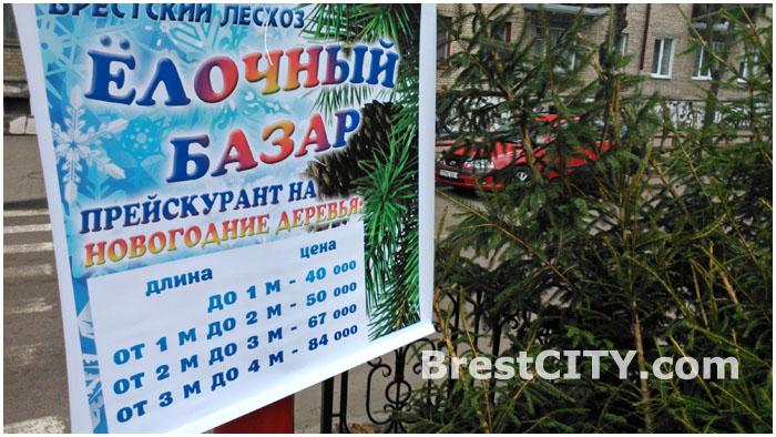 Елочный базар в Бресте на улице Гоголя