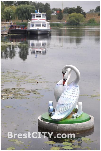 Скульптура Влюбленные лебеди на Набережной в Бресте