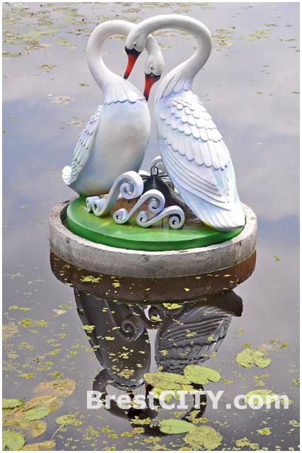 Влюбленные лебеди на Набережной в Бресте