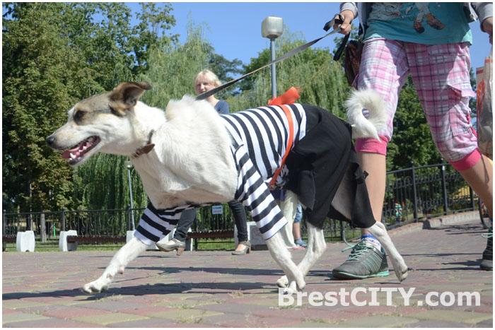 Парад бездомных животных в Бресте