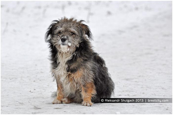 Бездомная собака на улице в Бресте