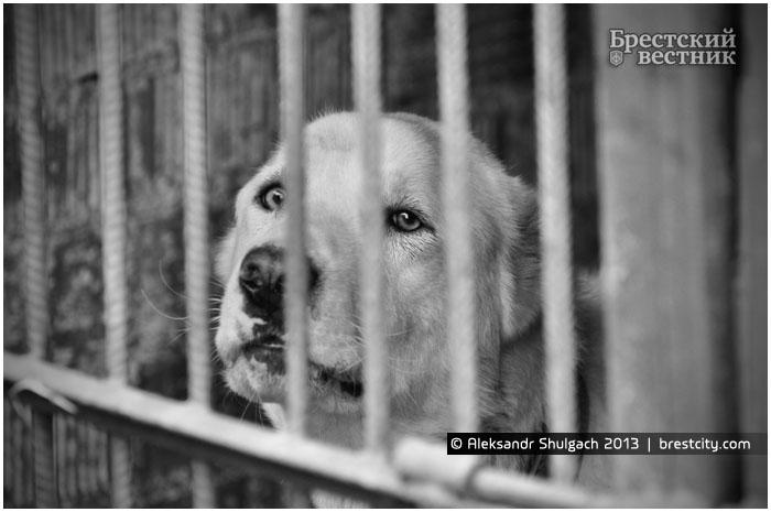 Собака в питомнике для животных