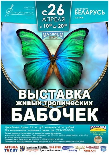 Выставка живых тропических бабочек в Бресте. Кинотеатр