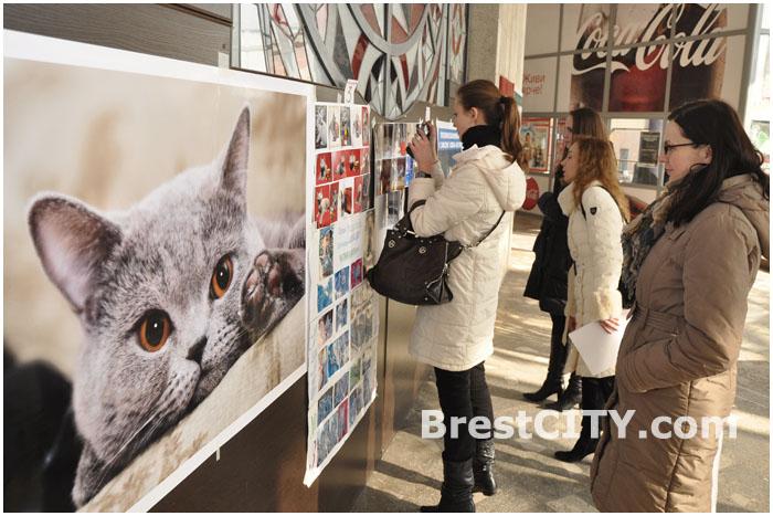 Выставка кошек в Бресте 19-20 октября 2013