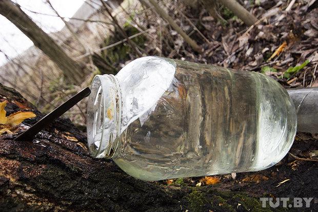 Как собирают березовый сок весной. Брестская область