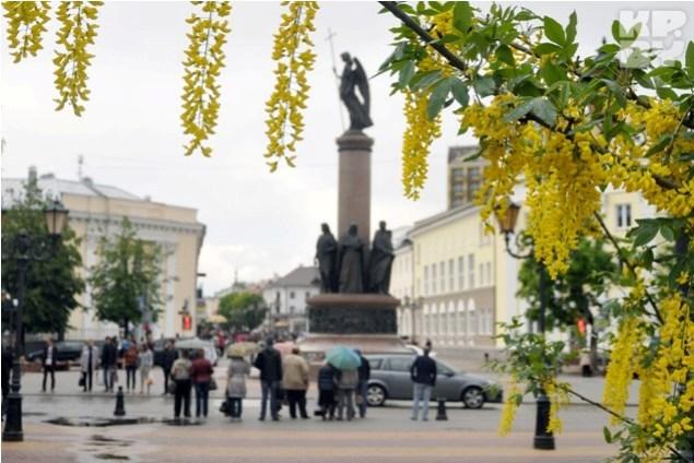 Растение бобовник (золотой дождь) в Бресте
