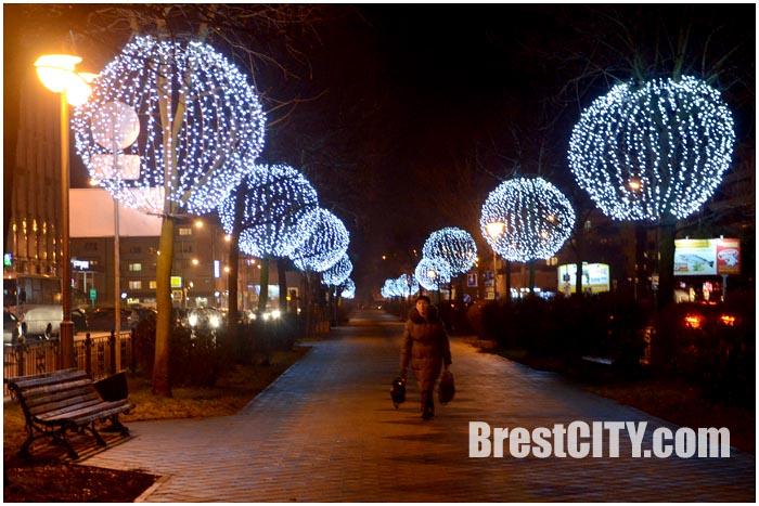 Деревья-одуванчики в Бресте