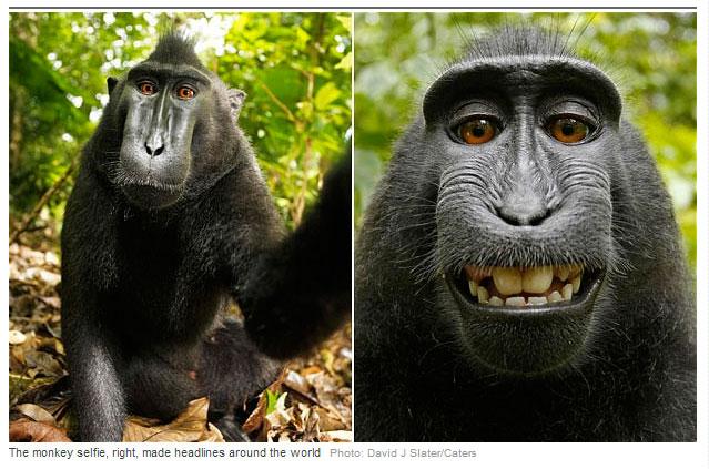Сэлфи обезьяны. Сфотографировала сама себя