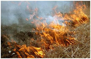 Выжигание сухой растительности в Бресте