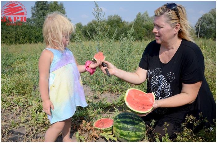 Выращивание арбузов в Беларуси возле Бреста. Тюхиничи