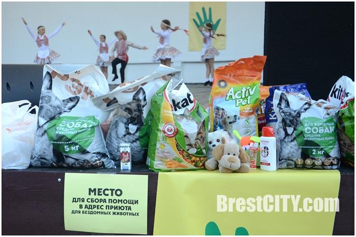 Благотворительный концерт ко Дню защиты бездомных животных. Фото BrestCITY.com