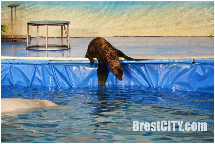 Дельфинарий в Бресте возле гипермаркета АЛМИ