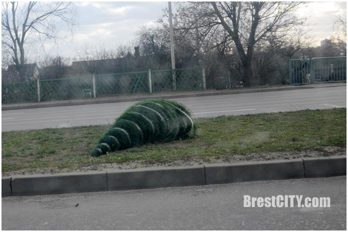 Сильный ветер в Бресте и области 22 декабря 2015