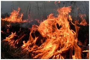 Сжигание травы и сухой растительности