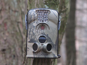 Фотоловушки в лесах на Брестчине