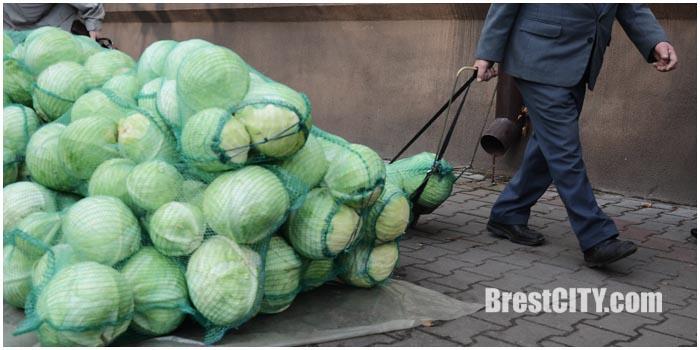 Продажа капусты. Капуста в сетке. Фото BrestCITY.com