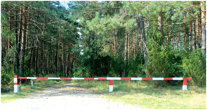 Запрещено посещать леса Беловежской пущи