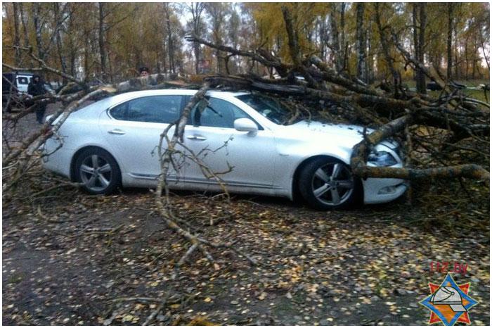 Дерево упало  на автомобиль Лексус