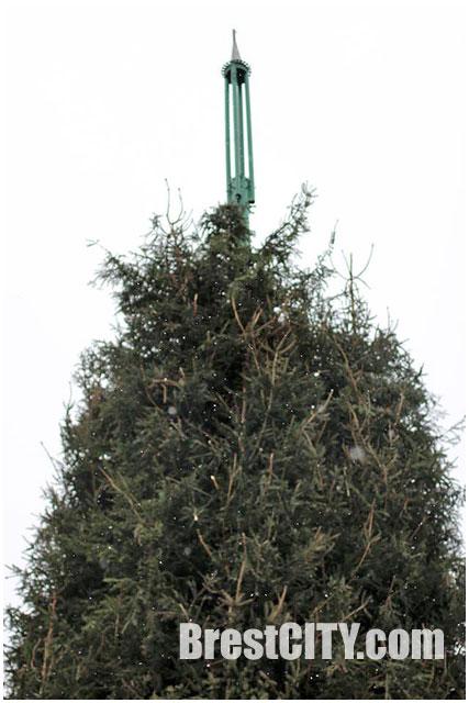 Демонтаж главной городской елки на пл.Ленина