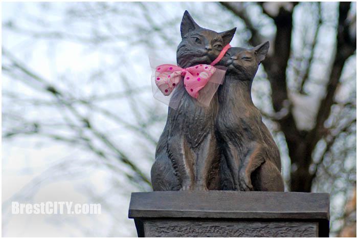 Влюбленные коты в Бресте. Фото BrestCITY.com