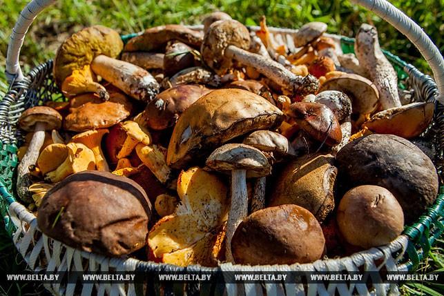 Фестиваль криница - грибов столица