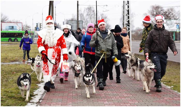 Хаски-шествие в Бресте 24 декабря 2016