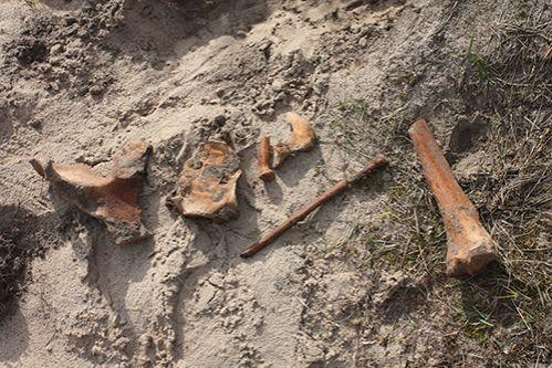 Лиса раскопала стоянку древнего человека