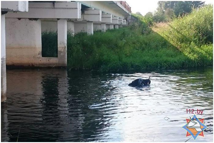 Ртуть на дне реки Лесная в Каменецком районе
