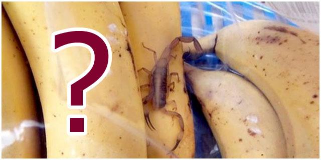 Скорпион среди бананов. Происшествие в магазине