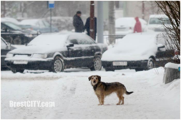 Циклон Эмма в Бресте. Снег уборка в городе