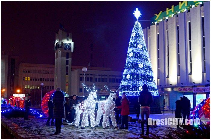 Новогодняя елка возле ЦУМа в Бресте. Фото BrestCITY.com