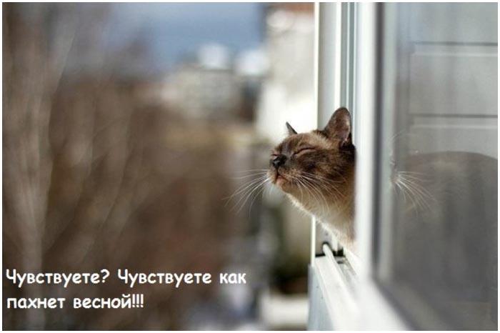 Кот. Весна. Тепло. Окно