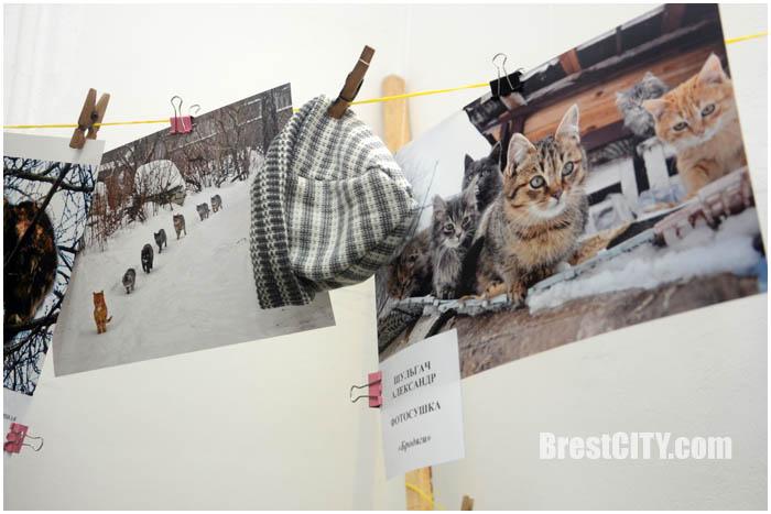 Выставка котов в краеведческом музее Бреста