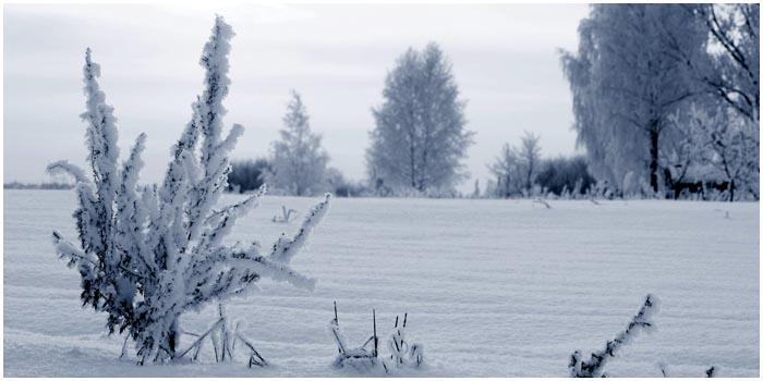 Зима. Морозное поле