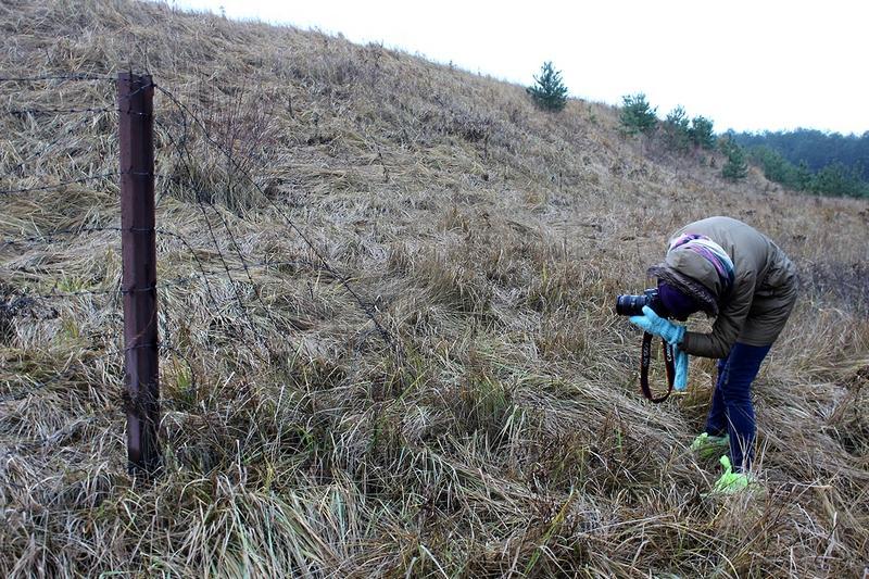 Радиоактивный могильник в деревне Струга. Колючая проволока лежит на земле давно, запутанная в корнях сорняков и в траве. Доступ на пункт захоронения ядерных отходов со стороны леса свободный. И никаких предупреждающих знаков нет